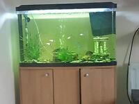 Marina VUE 87 aquarium, cabinet, heater, airpump and filter