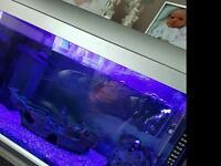 70ltr Tropical Fish Tank