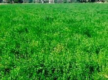 Hay for sale. Small Squares Lucerne/Rye. Baling 4th cut this week East Gippsland Preview