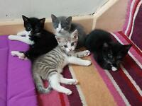 Beautful kittens for sale