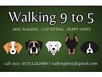 Professional Dog Walker / Cat Sitter in North-East London (N16, N15, N4)