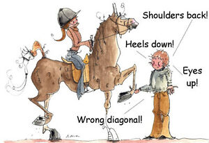 English riding lessons for beginners