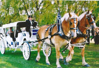 CINDERELLA WEDDING CARRIAGE RIDE
