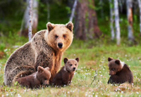 Wildlife Tours - Owned and Operated by Born and Raised Banffites
