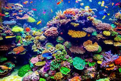 A Reef Insanity
