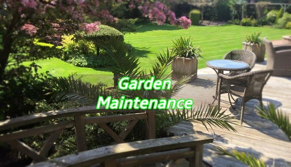 Professional Affordable Gardening Maintenance Service Window Cleaning Pressure Washing In Ealing London Gumtree