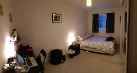 Large Room to Rent in Friendly Houseshare in Aigburth
