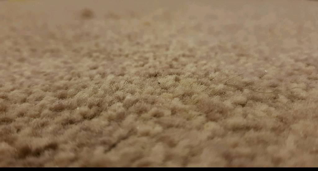 Leftover carpet