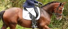 Childeric DHE Saddle Ellalong Cessnock Area Preview