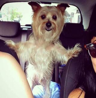 My Dog Needs a Day Buddy Randwick Eastern Suburbs Preview