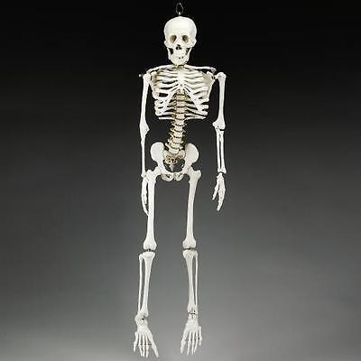 Human Skeleton/Skeletons, 50