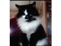 MISSING BLACK AND WHITE FLUFFY CAT