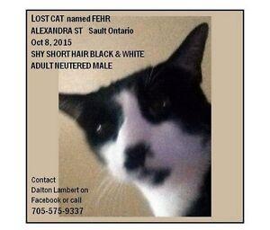 LOST Black & White Male Cat