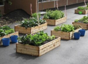 Looking for free lumber 4Elementary School garden