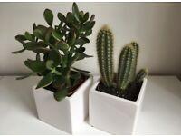 White porcelain plant pots (set of 2)