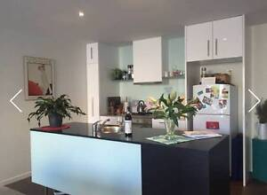 Room available in beautiful Carlton apartment! Carlton Melbourne City Preview