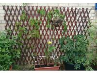 Piece of wire and wood trellis
