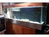 6x2x1.5 Custom Fish Tank Aquarium 520 litres