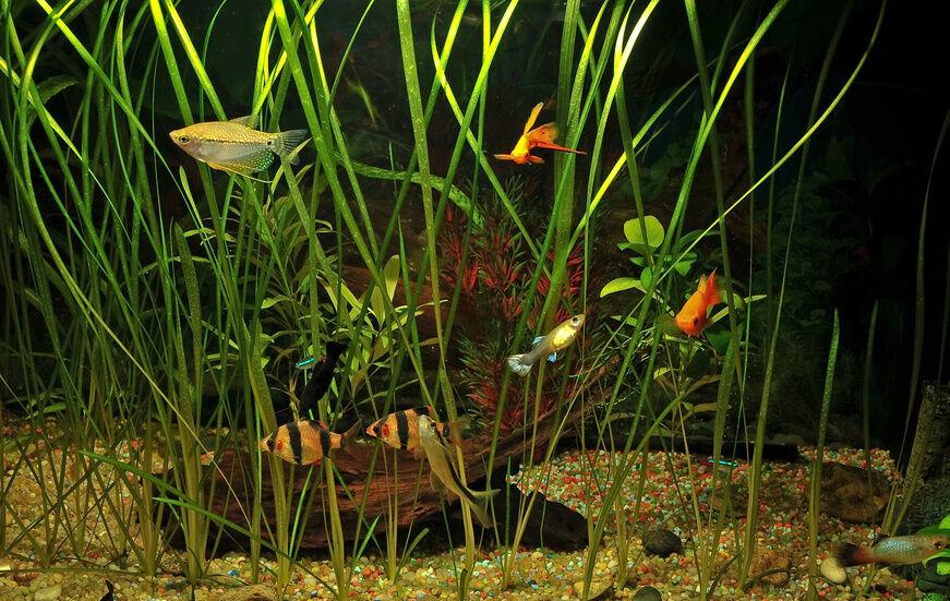 Your Guide to Tetra Aquarium Species