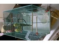 Budge with cage