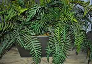 Nearly natural, beautiful and year-round fern