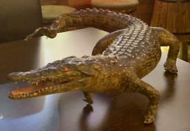 Taxidermy Crocodile