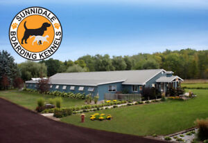 Dog and Cat Boarding at a Dog & Cat Hotel - Dog Training
