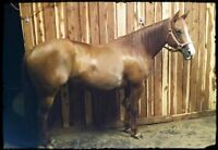 FOR SALE: TEAM PENNING/COW HORSE