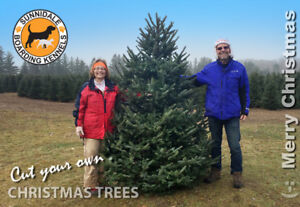 Cut your own Christmas Trees - Only $55 + HST