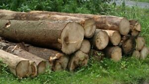 Cheapest tree cutting service in Cole harbour