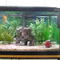 25G Gallon Tank with Stand, Goldfish and White Clouds