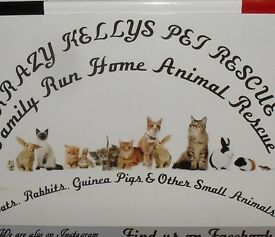 DRIVEWAY GARAGE SALE IN AID OF KRAZY KELLYS PET RESCUE