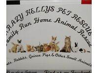 GARAGE / DRIVEWAY HOUSE SALE IN AID OF KRAZY Kellys PET Rescue