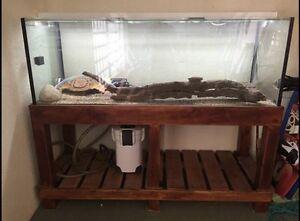 Fish Tank Bli Bli Maroochydore Area Preview