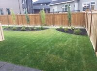Special: Sod Supply & Installation For Only $0.79/Sqft