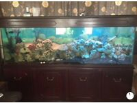 Fresh water fish tank (full set up)