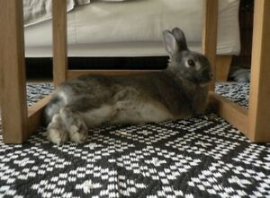 Bunny//lapin  ( prix négociable// negotiable price)