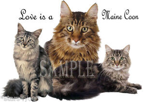 MAINE COON ( LOVE MY ) COLLECTABLE COFFEE MUG