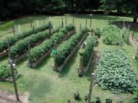 Wanted - Small land to rent, for Vegetable Garden.