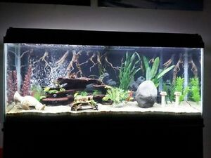 55 gallon aquarium Windsor Region Ontario image 1