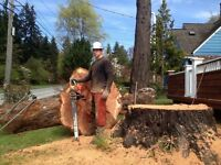 Quick trim... ,Tree and branch removal service. 289-600-4715...
