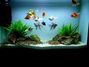 LOOKING FOR FREE SMALL FISH TANK WITH ACCESSORIES