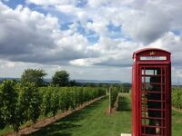 Wolfville Magic Winery Tour