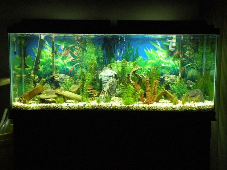 How to sell a fish tank ebay for 55 gallon aquarium decoration ideas