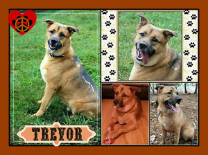 I'M TREVOR, I WOULD LOVE A FOSTER OR FOREVER HOME OF MY OWN