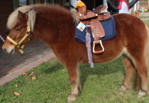 Wanted Safe and Healthy Ponies! - To Purchase !