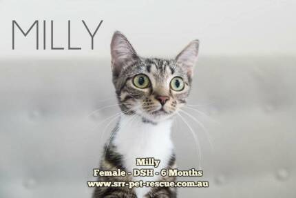 Milly - Soquilichi Rescue | Cats