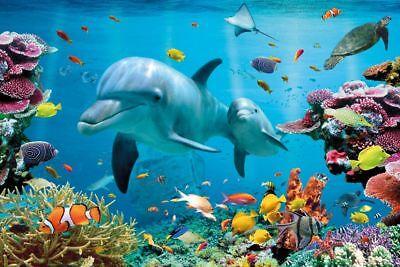Delfin Dolphin Tropical Unterwater Ocean - Poster 91,5x61 cm Dolphin Papier