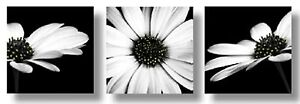 Black & White Flower Floral Set of 3 Canvas Wall Art Pictures Monochrome