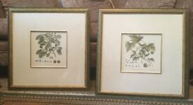 Beech and Plane Pair of Leaf Prints Framed & Glazed H23in/58cm W23in/58cm